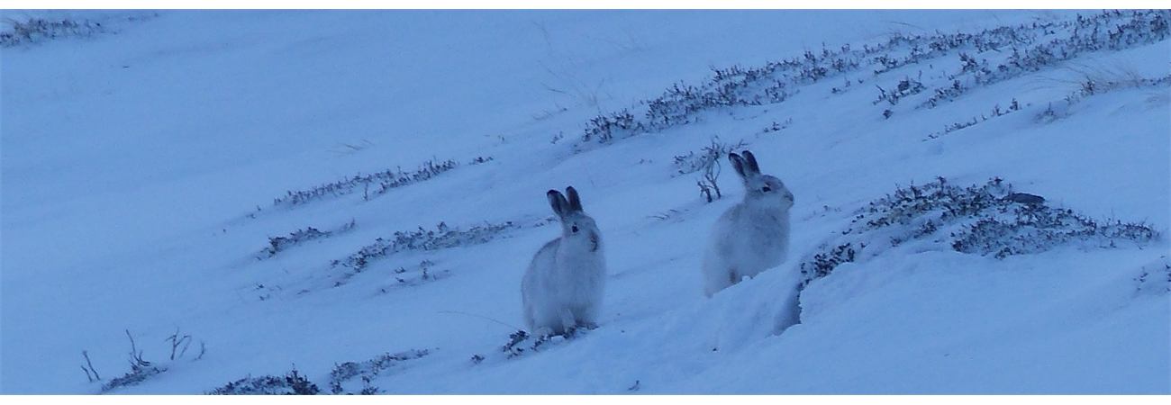 Winter Wildlife in Braemar - Come along and see which ones you can find.